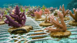 Working with Coral Vita on next generation coral nurseries to prevent global extinction of shallow water corals.