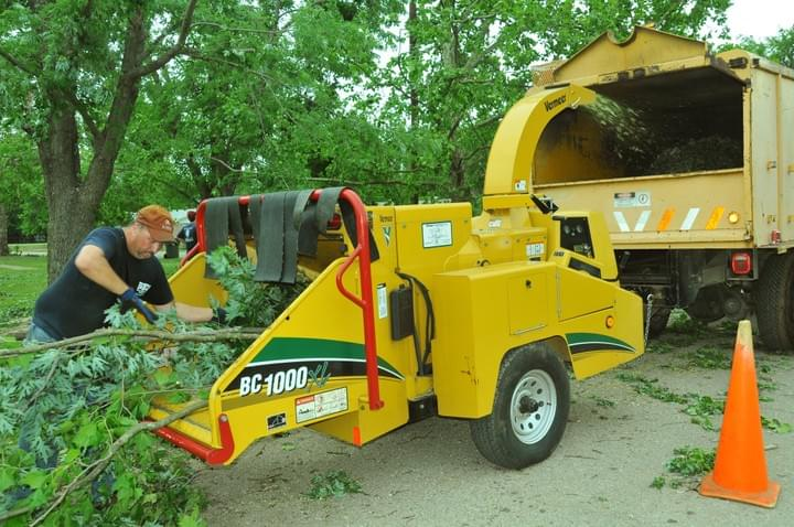 best tree removal service in my area