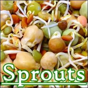 Sprouts StartOver.xyz Possibility Management