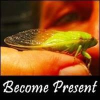 Become A Seed, Become Present, startover.xyz, Possibility Management