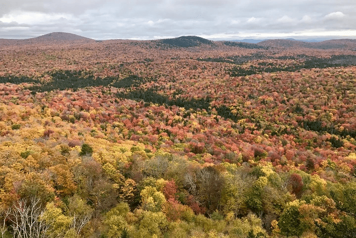 Groton State Forest, (c) J. Murdoch