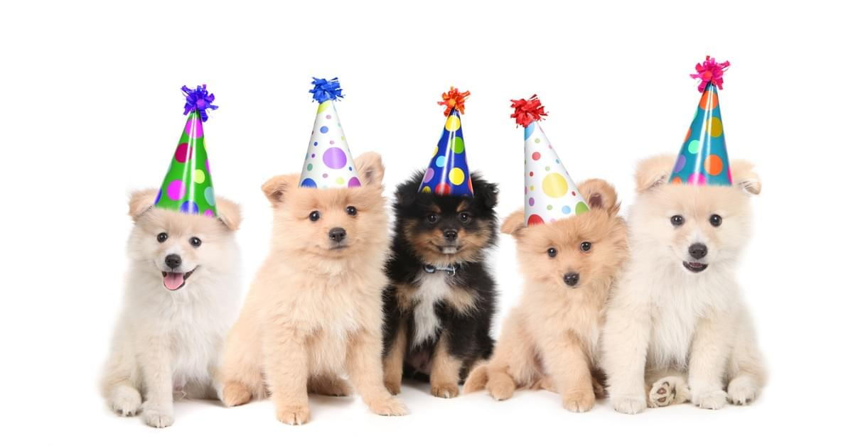 5 Puppies with Party Hats on Heads