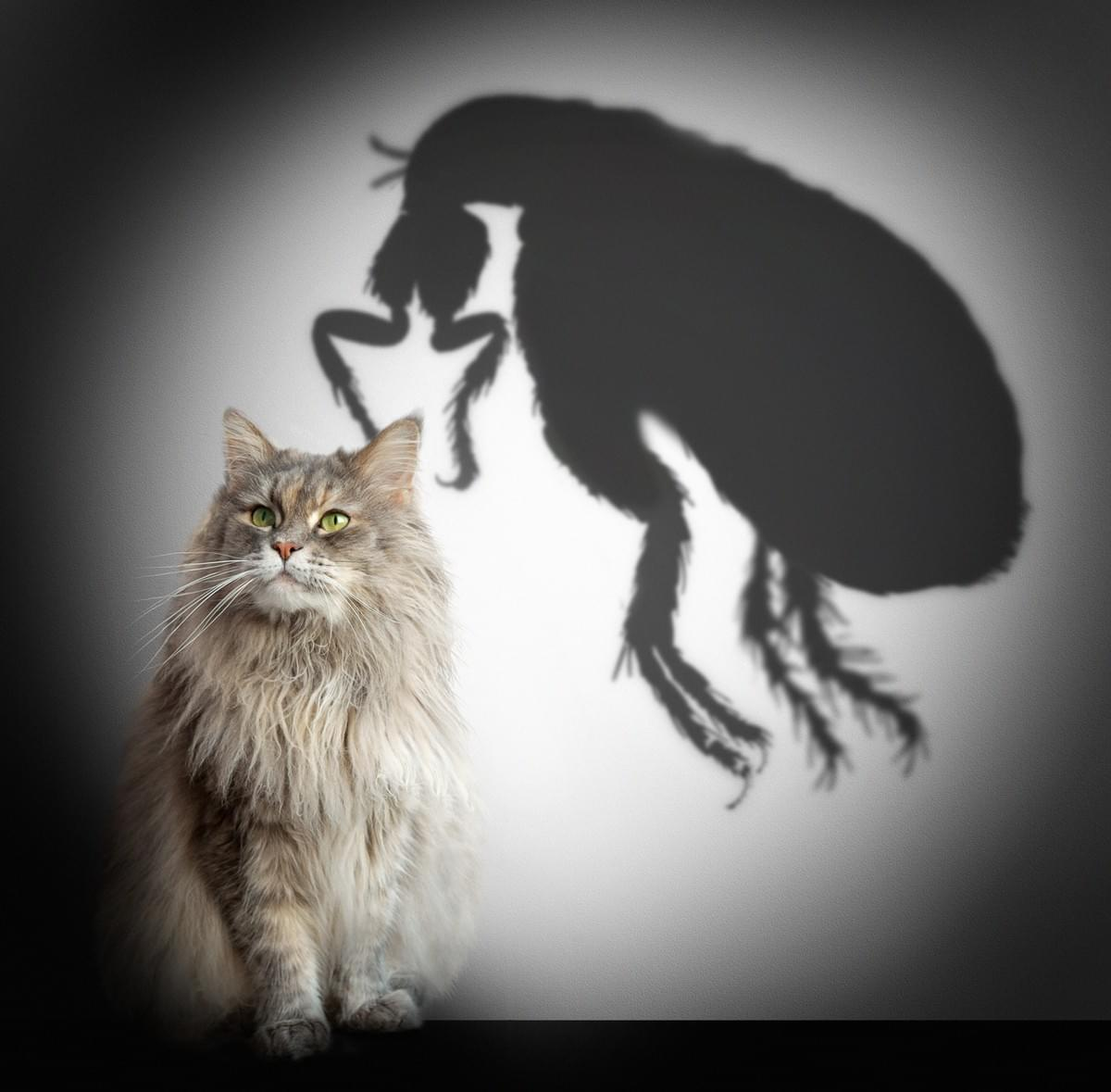 organic flea protection