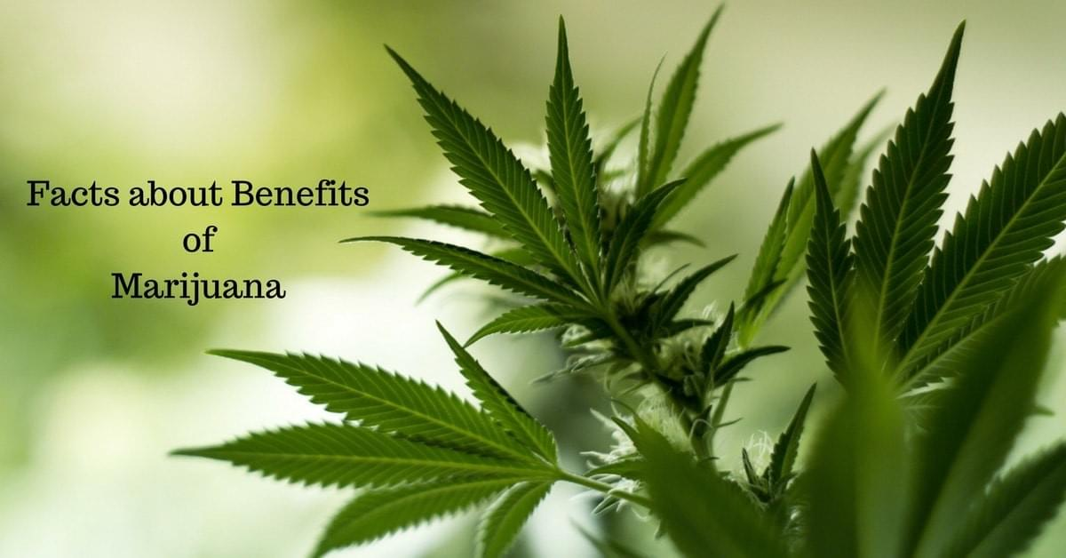 Facts about Benefits of Marijuana
