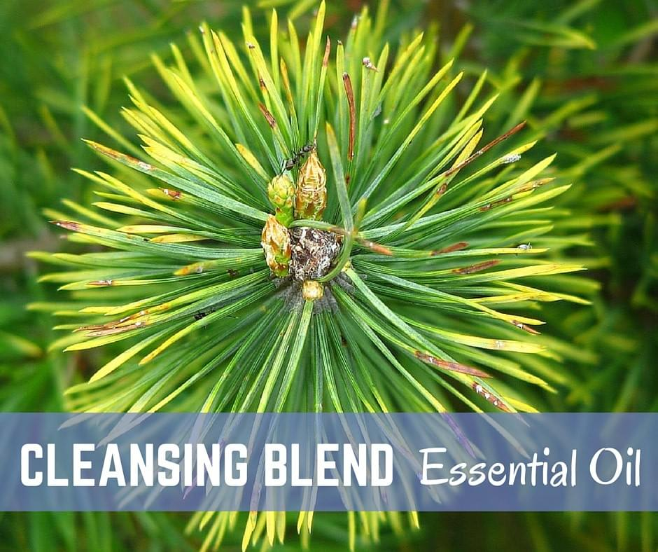 STEP 8 - PURIFY YOUR HOME WITH THE CLEANSING BLEND
