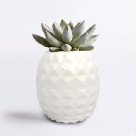 Pineapple Succulent Pot
