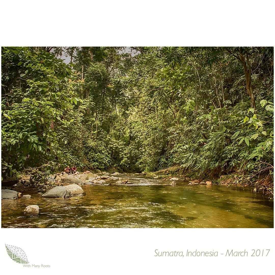 Image of a river and jungle, Sumatra, Indonesia - by With Many Roots
