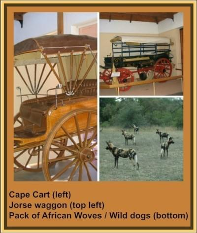 Cape Cart; Horse wagon; Wild dogs