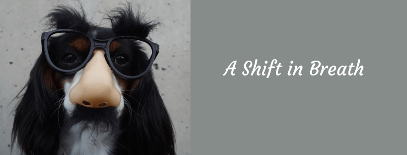 A shift in breath. A dog wearing glasses with a big nose.