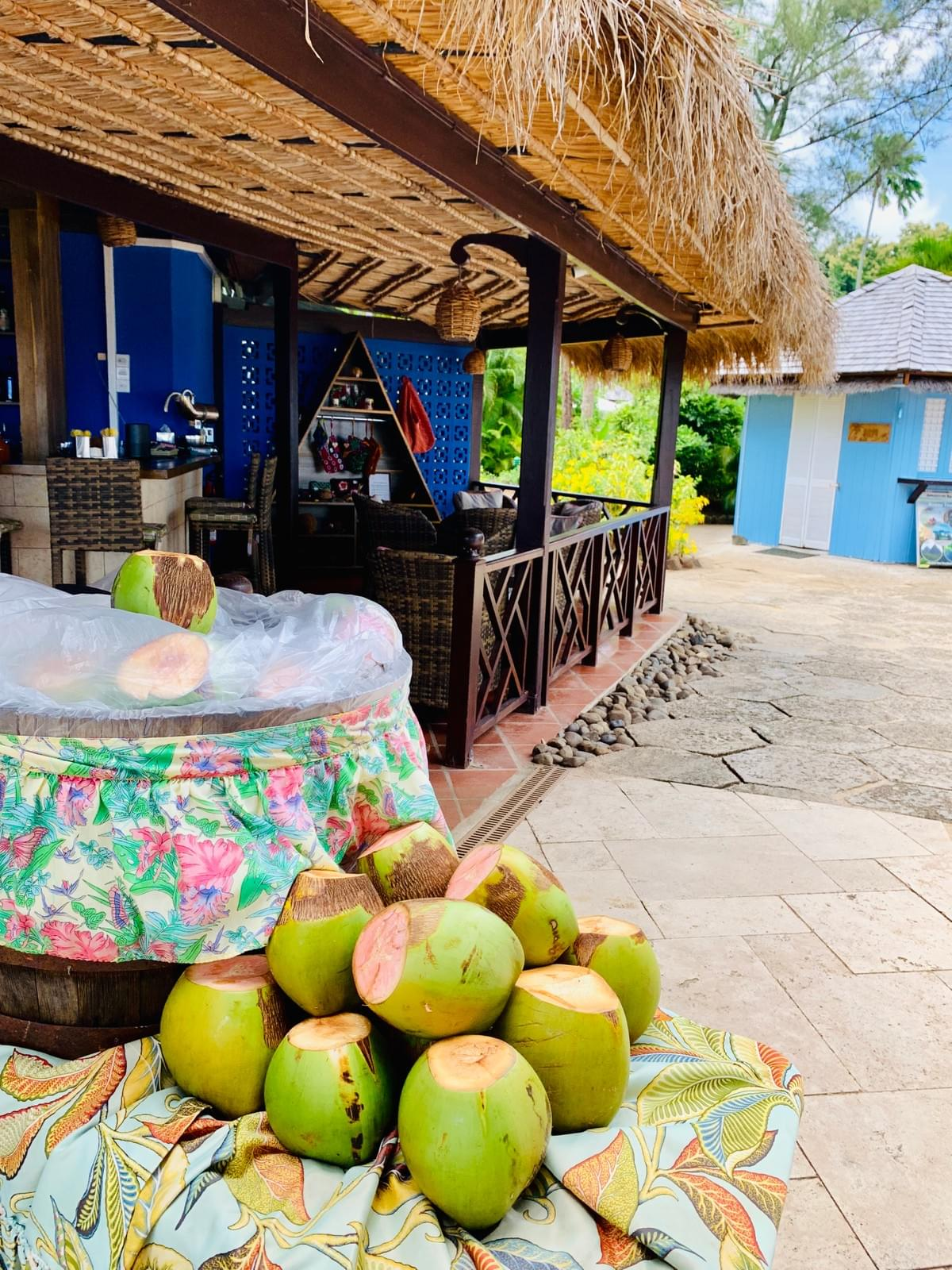 a Bunch of coconuts chilling next to the bar in Saint Lucia at East Winds resort in Saint Lucia for cocktails and drinks