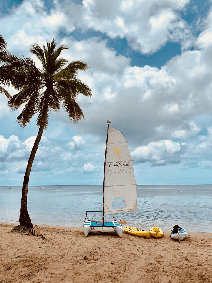 East Winds sail boat next to a palm tree and three kayak and canoes on the beach in Saint Lucia off the Caribbean Sea