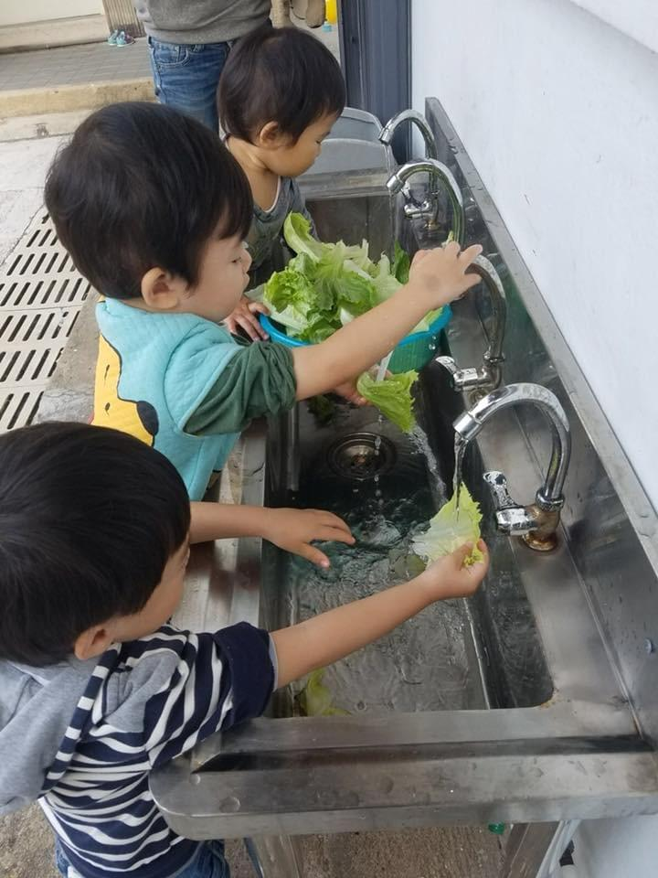 Organic farm to classroom fresh produce like lettuce and other vegetables
