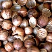 Coriander Seeds in Gin
