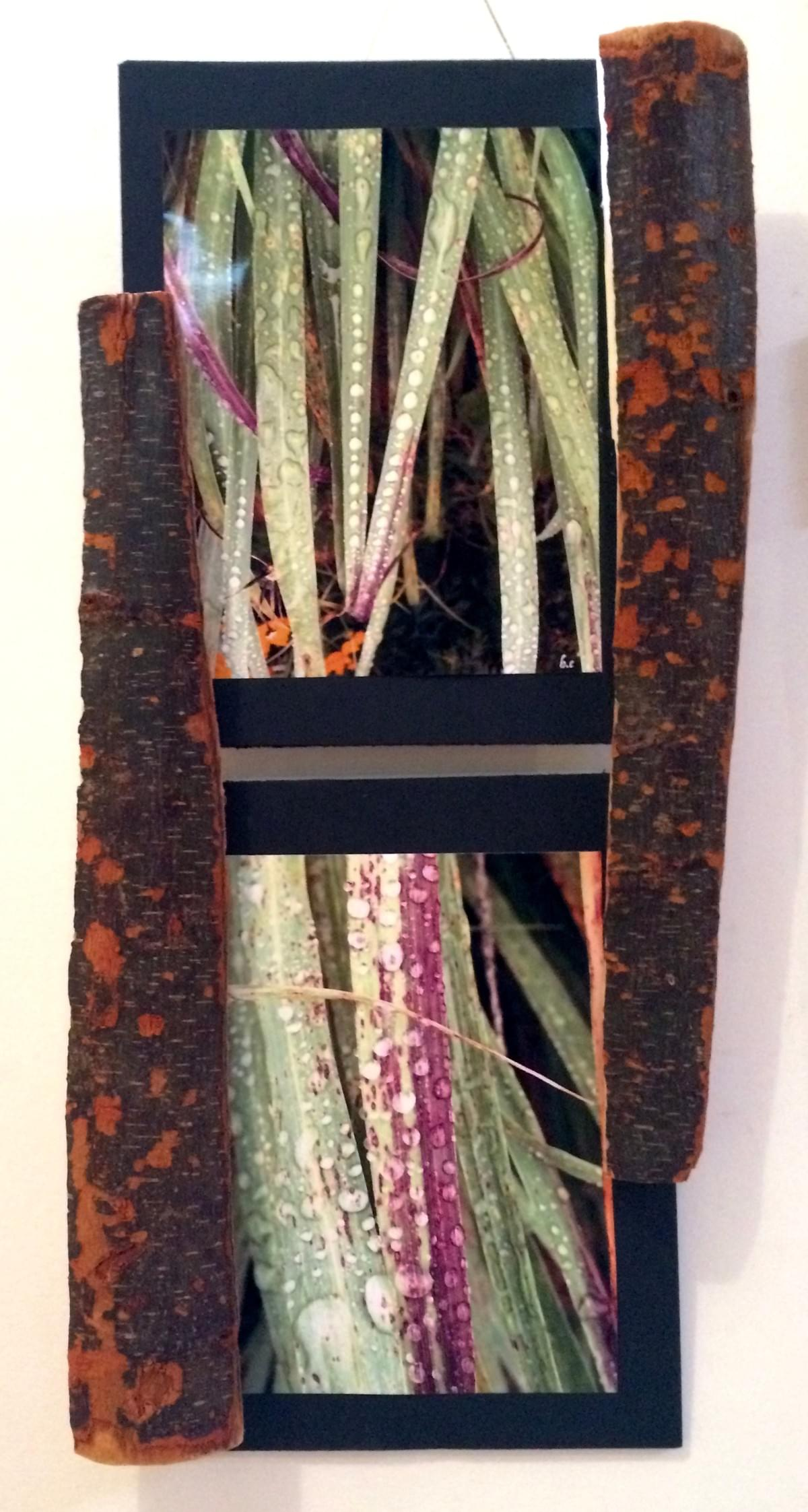 These photos were taken after a sudden rain shower in Maui, Hawaii late spring of 2016. Rain and sun are constant companions in the tropics, and make for beautiful bejeweled reflections. The frame was fashioned from an arbutus trunk washed up here in Victoria from the Salish Sea.
