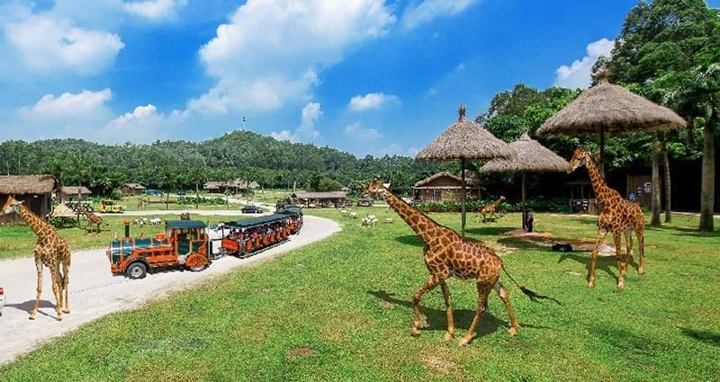 Spoonhunt Guide to the Best Restaurants in Guanghzou Chimelong Safari Park 长隆野生动物世界