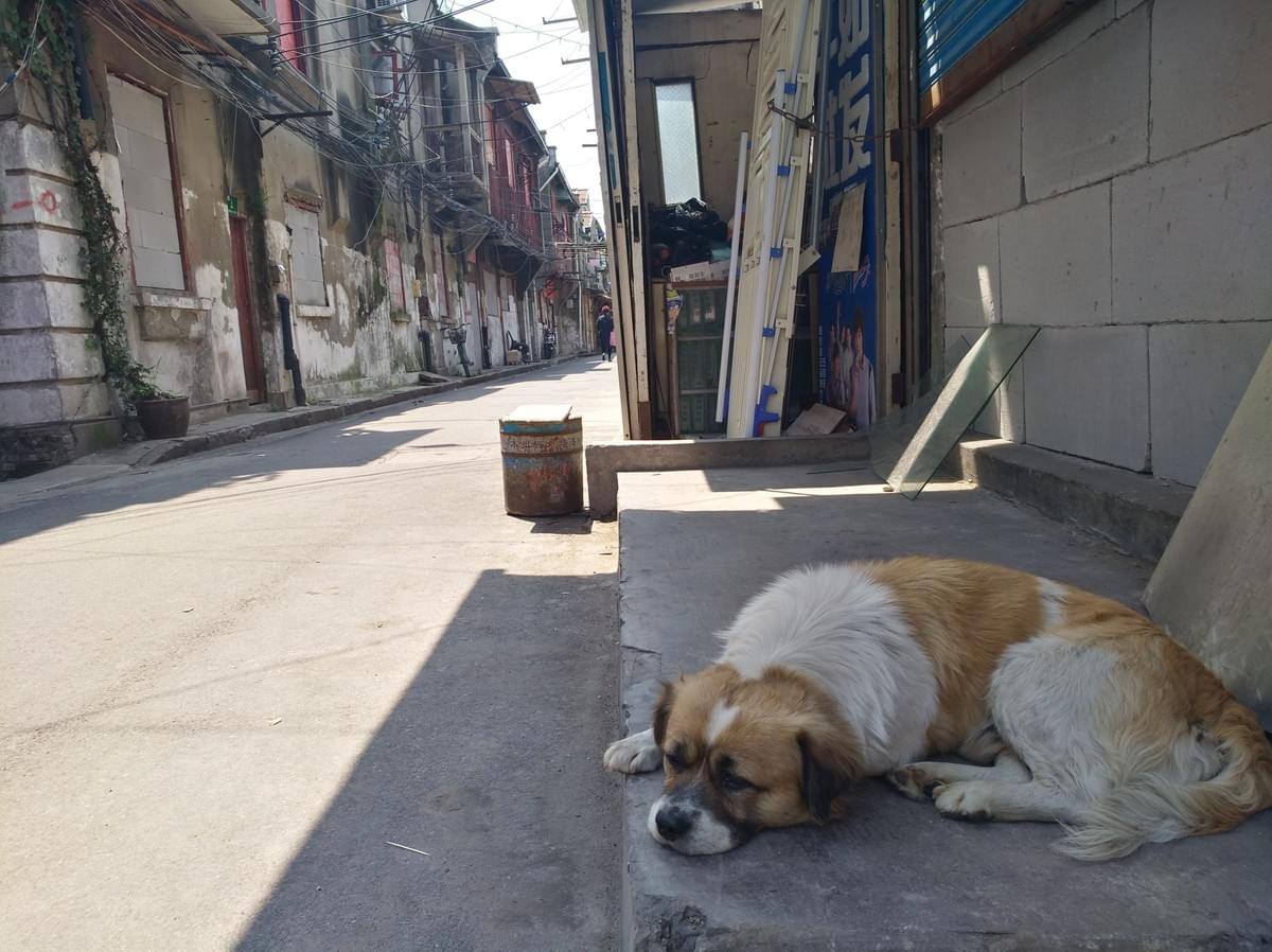 Picture source:Culture Shock's archives; even pets mourn the demolition of the Old City