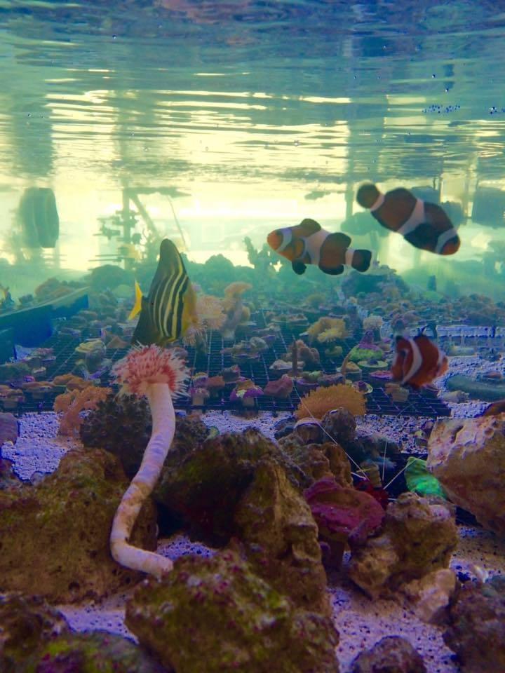 Palmetto Reef Site