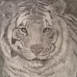 Tiger - Graphite pencil on paper