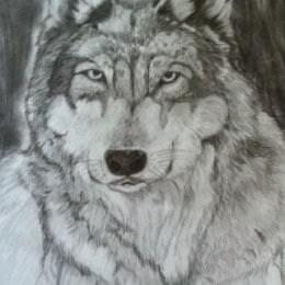 Wolf  Graphite pencil on paper