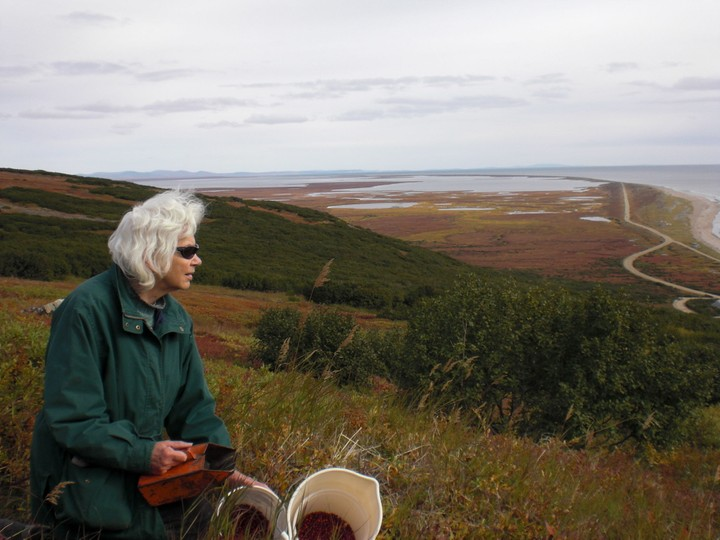 author Nancy Danielson Mendenhall picking berries in Arctic