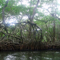 Mangroves at Sontecomapan