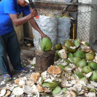 You won't be short on coconuts