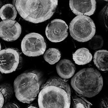「ki&」 thinning wood design project