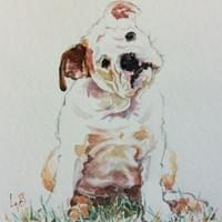 Curious Bulldog Pup (watercolour)
