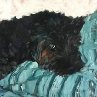 Moxie Naps (oil on canvas)
