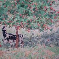 Normandy Cows in Apple Season