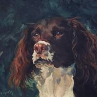 Hugo the English Setter (oil on canvas)