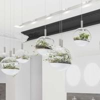 Terrariums suspendus, boutique The Harmonist de Paris