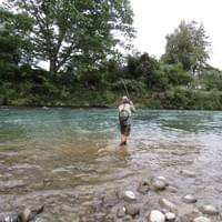 Hooked up in Turangi! Guided fly fishing the Tongariro river, New Zealand