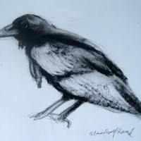 Raven. Graphite and charcoal on paper.