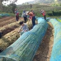 Students making typhoon proof vegetable farm