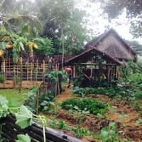 Kitchen garden at Field School Philippines