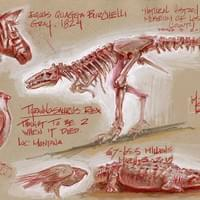 Natural History Museum Sketches