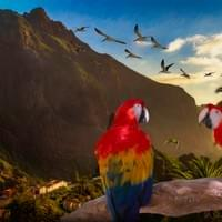Mountain Village Parrots