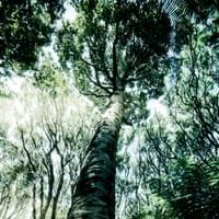 A low angle of the trees helps make them look taller. image taken with cellphone.
