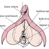The Clitoris is the source of pleasure and is a woman's primary sexual organ.