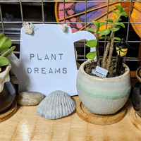 Plant Dreams -- Personalized Succulents