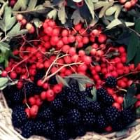 Autumn Foraging Walk