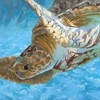 Turtle Triptych (panel 3)