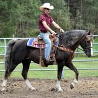 Chili Colorado, Morgan gelding we are playing with.