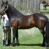 Marvelous Quest coming five year old stallion