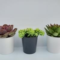 Deco Succulent Program
