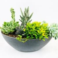38cm Succulent mix bowl with plastic pot