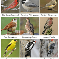 Backyard Birds App