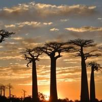 The sunset in Baobab Avenue