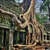 "Ta Prohm, ""Tomb Raider"" temple, Cambodia"